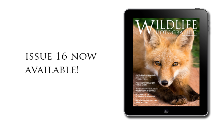 issue-available-now16